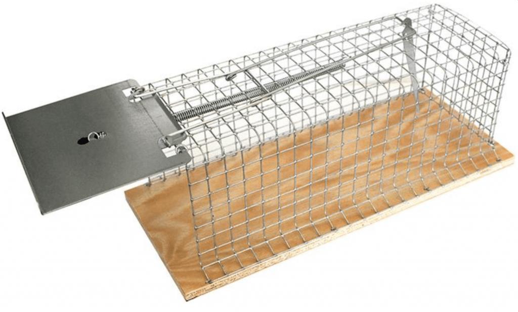 Fångstbur råtta Swissinno