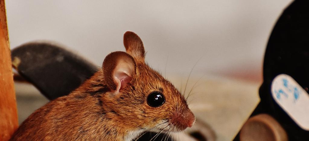 Omtalade Fungerar ultraljud mot möss? HM-35