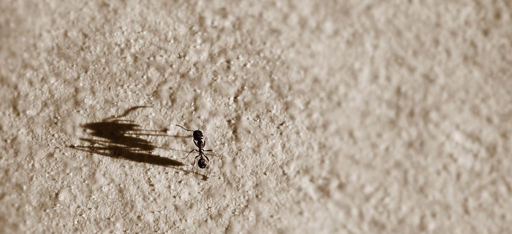 myrr giftigt för människor