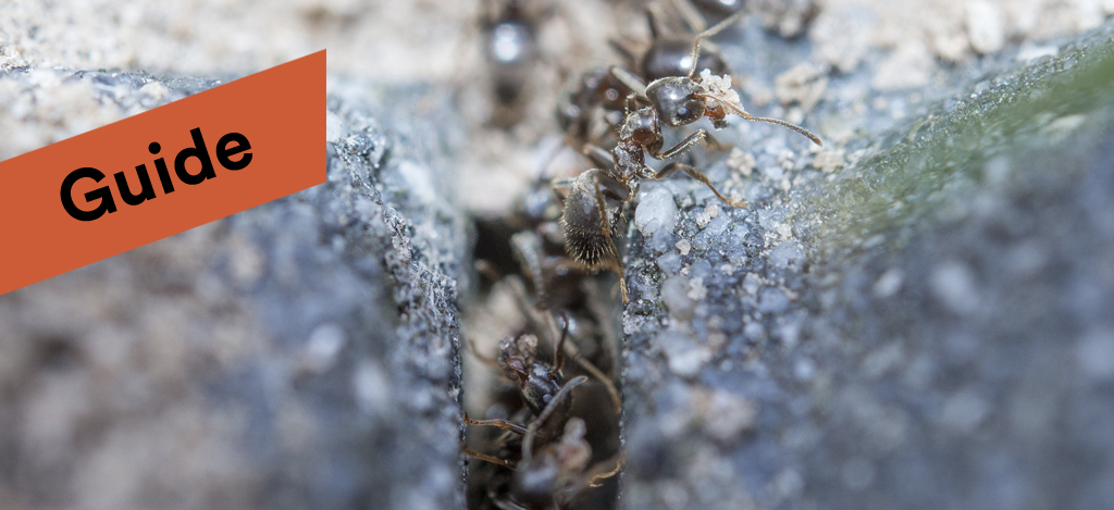 svart myra kön lesbisk gratis klipp