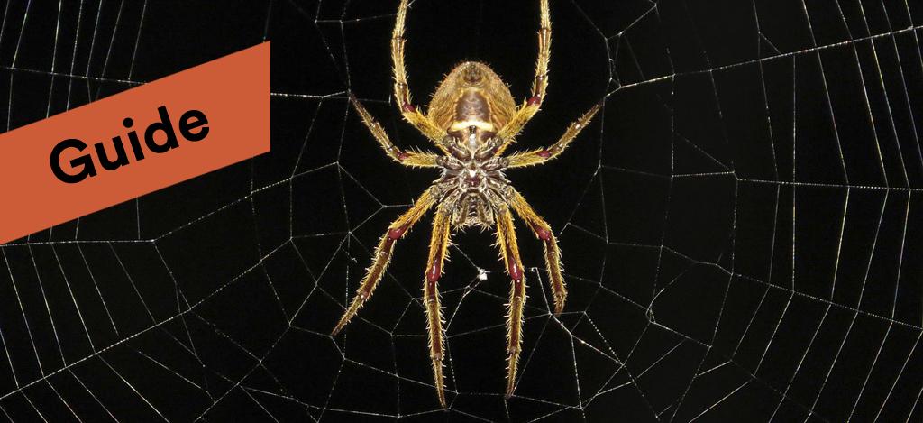 Spindlar  guide till hur du slipper spindlar i hemmet ce8e110a4106f
